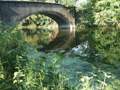 audubon_park_bridge_reflection